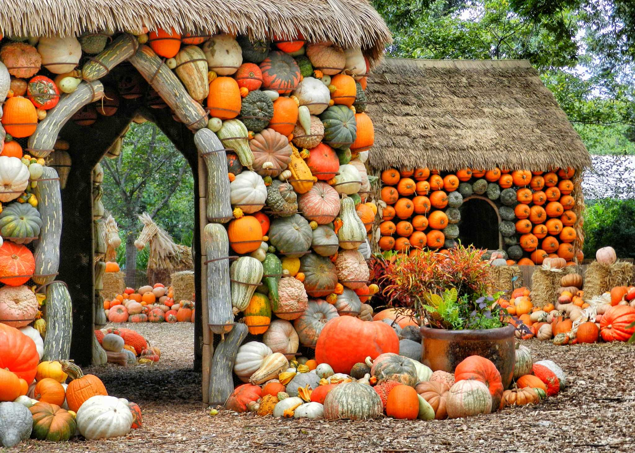 Dallas Arboretum puts on a show of fall colors - Houston Chronicle