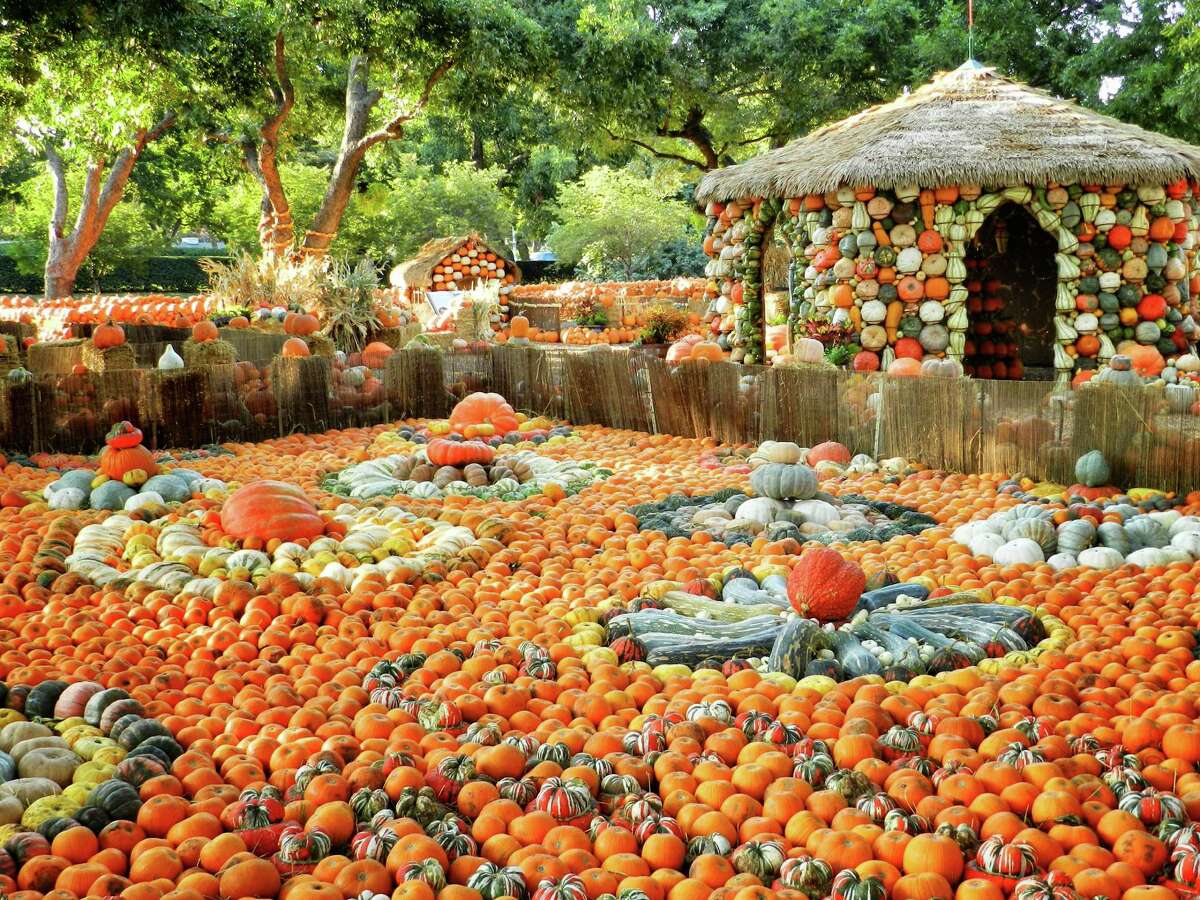 The Pumpkin Village at the Dallas Arboretum and Botanical Gardens is one of the highlights of Autumn at the Arboretum.