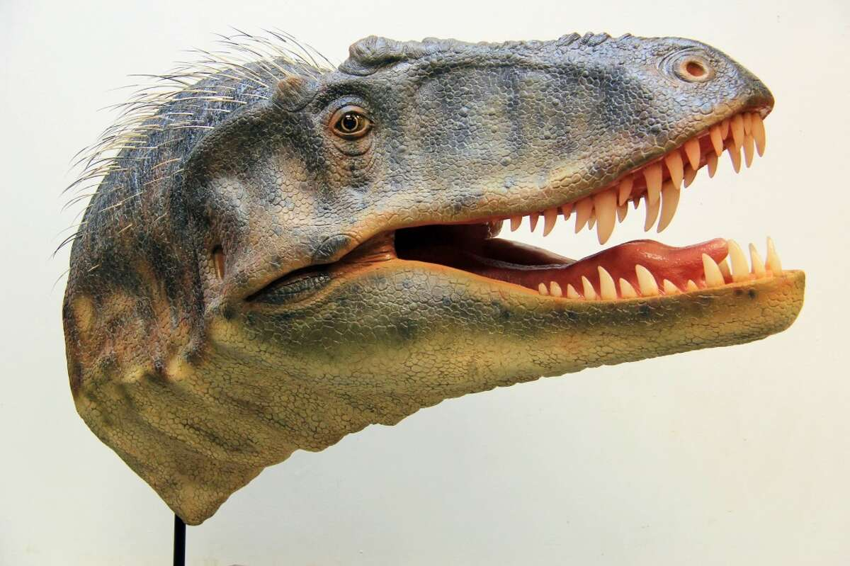 Nice to meet you, Lythronax argestes. Pictured is a skeletal replica of the new tyrannosaur believed to be a great-uncle