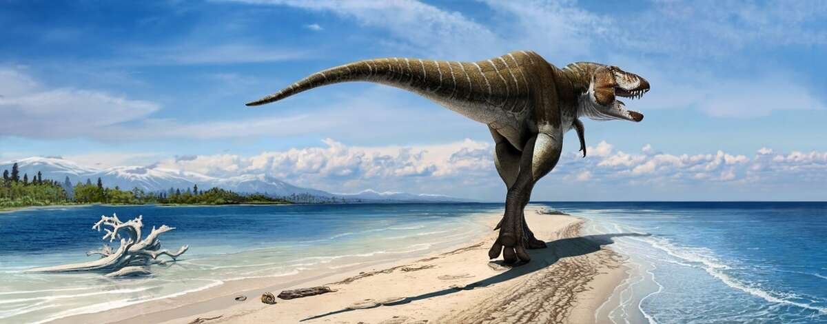 At 24 feet long and 8 feet tall at the hip, new dino Lythronax was like a T. rex half-pint. It's pictured in an artist rendering released by the Natural History Museum of Utah.