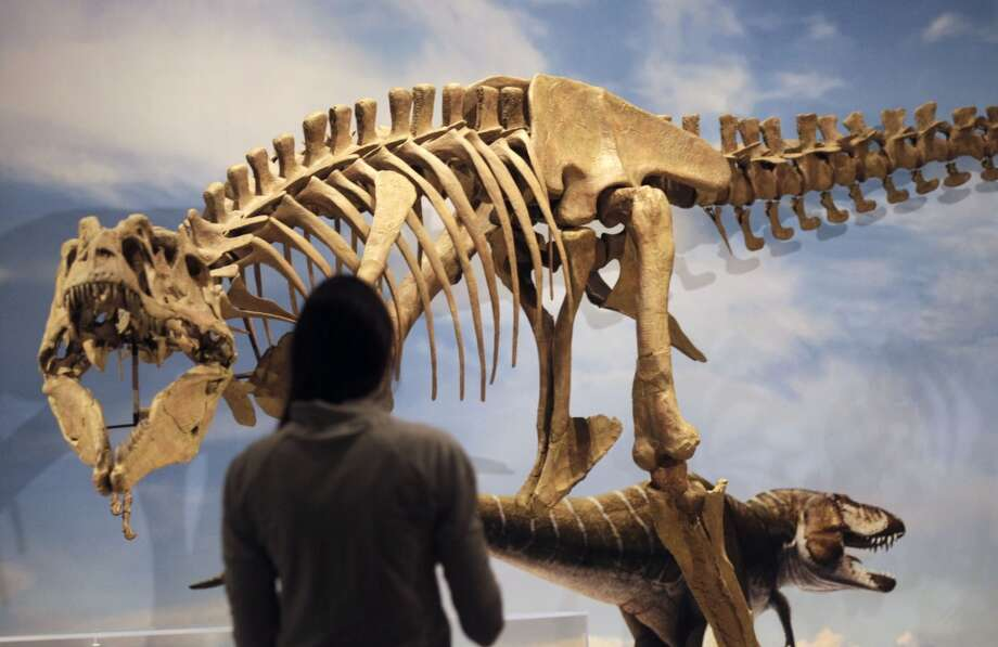 Well hello, good-looking. A new species of tyrannosaur unearthed in Grand Staircase-Escalante National Monument in southern Utah is revealed at the Natural History Museum of Utah in Salt Lake City. On a trip to Utah next week, President Trump is expected to slash the national monument in half.  Photo: Al Hartmann, AP/The Salt Lake Tribune