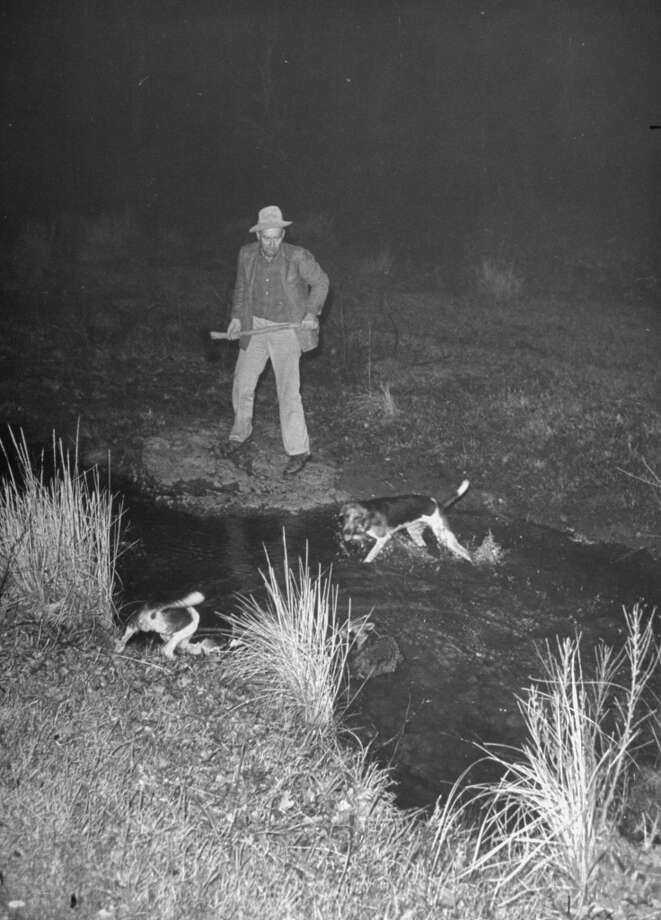 Fred Gipson with dogs during coon hunt, 1949. Photo: Thomas D. McAvoy, Time & Life Pictures/Getty Image
