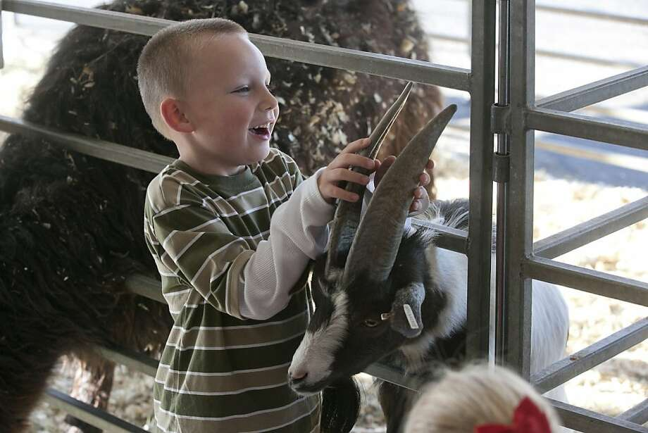 Reverse gear suddenly doesn't work: Five-year-old Justin Vance locks horns with a goat at the Jungle Safari exhibit in Midland, Texas. Photo: James Durbin, Reporter-Telegram