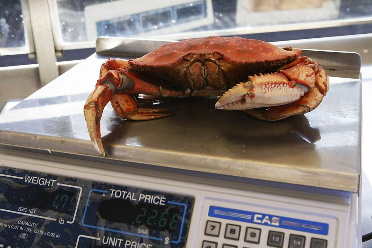 A crab is seen on the scale at the sidewalk cafe at Tarantino's in San Francisco, Calif. on Friday, Nov. 1, 2013.