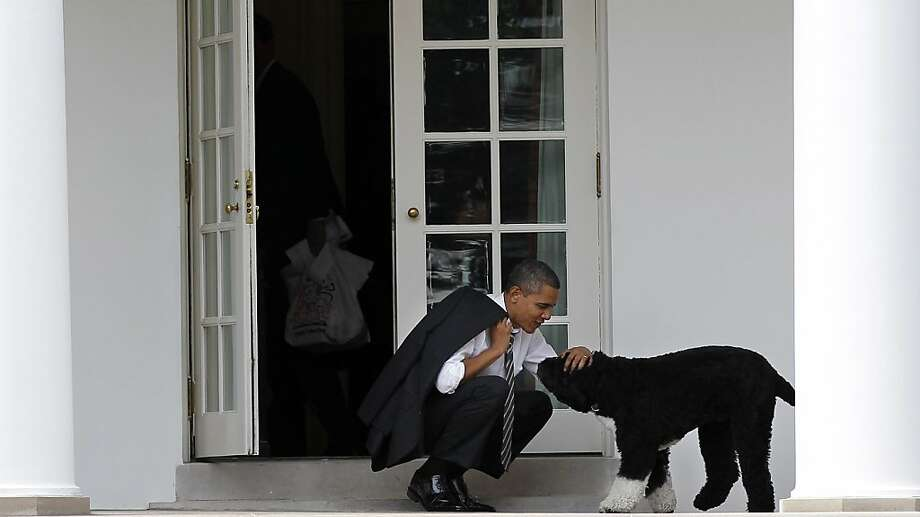 "Even President Obama's ""hypoallergenic"" Portuguese water dog, Bo, probably sheds canis familiaris 1. Photo: Pablo Martinez Monsivais, Associated Press"