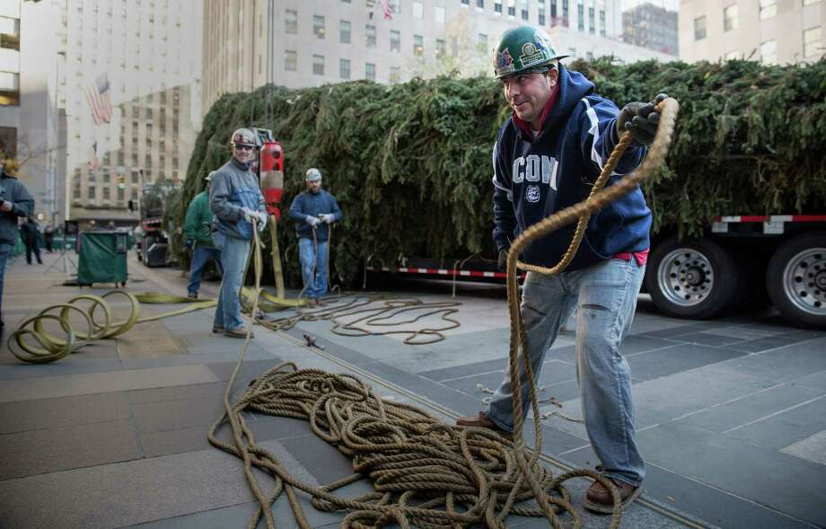 NEW YORK, NY - NOVEMBER 08:  Workers prepare a 76-foot tall Norway Spruce, from Shelton, CT, to be hoisted into position as the 2013 Rockefeller Center Christmas Tree on November 8, 2013 in New York City.  The tree comes from the Vargoshe family, it was likely planted in the 1950s.  (Photo by Andrew Burton/Getty Images) ORG XMIT: 187493731 Photo: Andrew Burton, Getty / 2013 Getty Images
