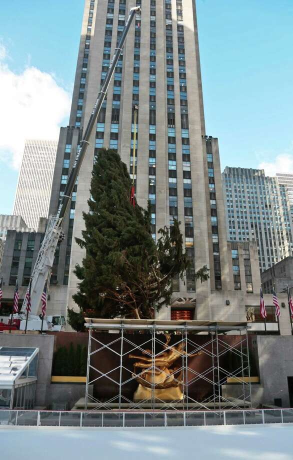 The Rockefeller Center Tree from Shelton, Conn., is raised and moved to its pedestal  on Friday, Nov. 8, 2013 at Rockefeller Plaza in New York.  The 76-feet tall Norway spruce, donated by John Vargoshe and his wife Louise Vaargoshe, is approximately 75 years-old and weighs 12-tons. (AP Photo/Bebeto Matthews) ORG XMIT: NYBM102 Photo: Bebeto Matthews, AP / AP