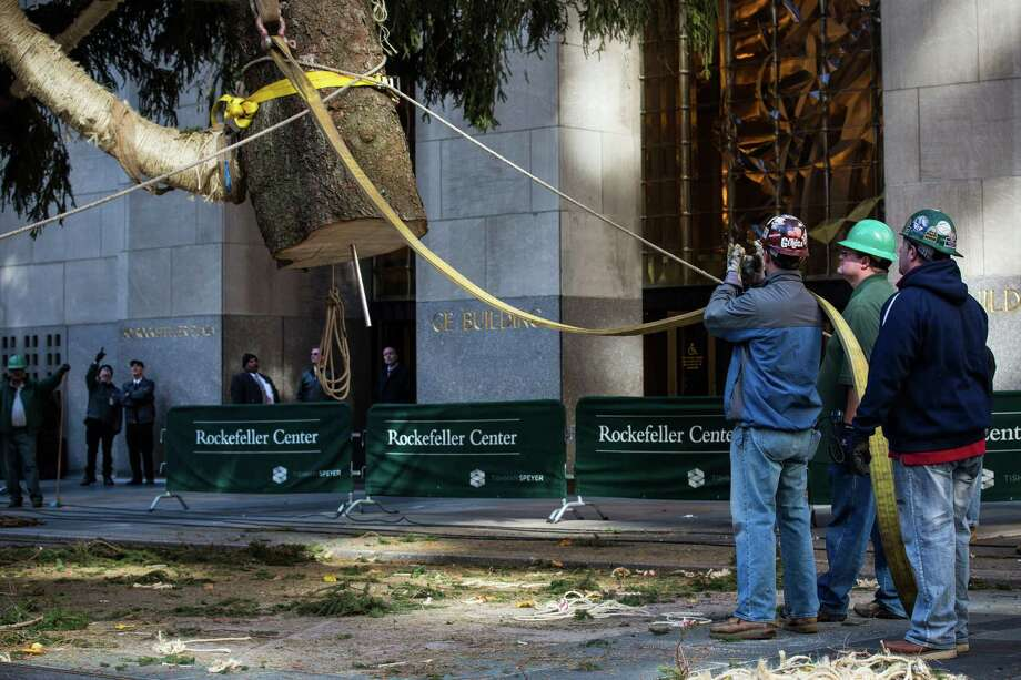 NEW YORK, NY - NOVEMBER 08:  Workers position a 76-foot tall Norway Spruce, from Shelton, CT, into position as the 2013 Rockefeller Center Christmas Tree on November 8, 2013 in New York City.  The tree comes from the Vargoshe family, it was likely planted in the 1950s.  (Photo by Andrew Burton/Getty Images) ORG XMIT: 187493731 Photo: Andrew Burton, Getty / 2013 Getty Images