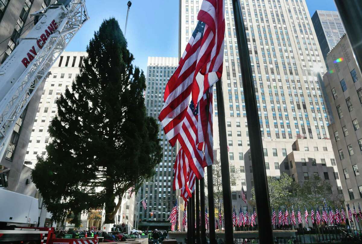 The Rockefeller Center Tree from Shelton, Conn., is raised and moved to its pedestal on Friday, Nov. 8, 2013 at Rockefeller Plaza in New York. The 76-feet tall Norway spruce, donated by John Vargoshe and his wife Louise Vaargoshe, is approximately 75 years-old and weighs 12-tons. (AP Photo/Bebeto Matthews) ORG XMIT: NYBM101