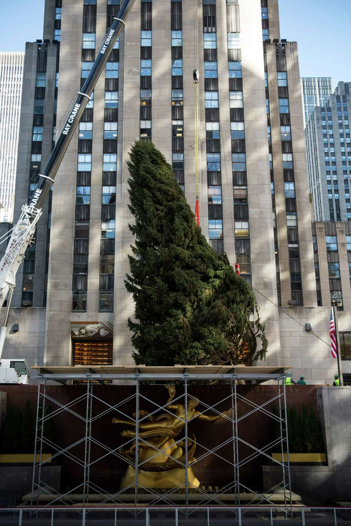NEW YORK, NY - NOVEMBER 08: A 76-foot tall Norway Spruce, from Shelton, CT, is lifted into position as the 2013 Rockefeller Center Christmas Tree on November 8, 2013 in New York City. The tree comes from the Vargoshe family, it was likely planted in the 1950s. (Photo by Andrew Burton/Getty Images) ORG XMIT: 187493731