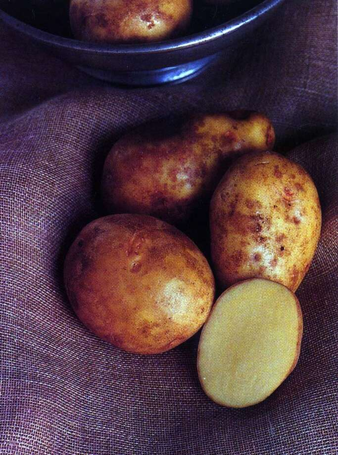 Potatoes that are higher in starch, such as russet potatoes, break down more easily than red potatoes, giving you fluffier mashed potatoes. Photo: KELLY BUGDEN, HO / HOUGHTON MIFFLIN