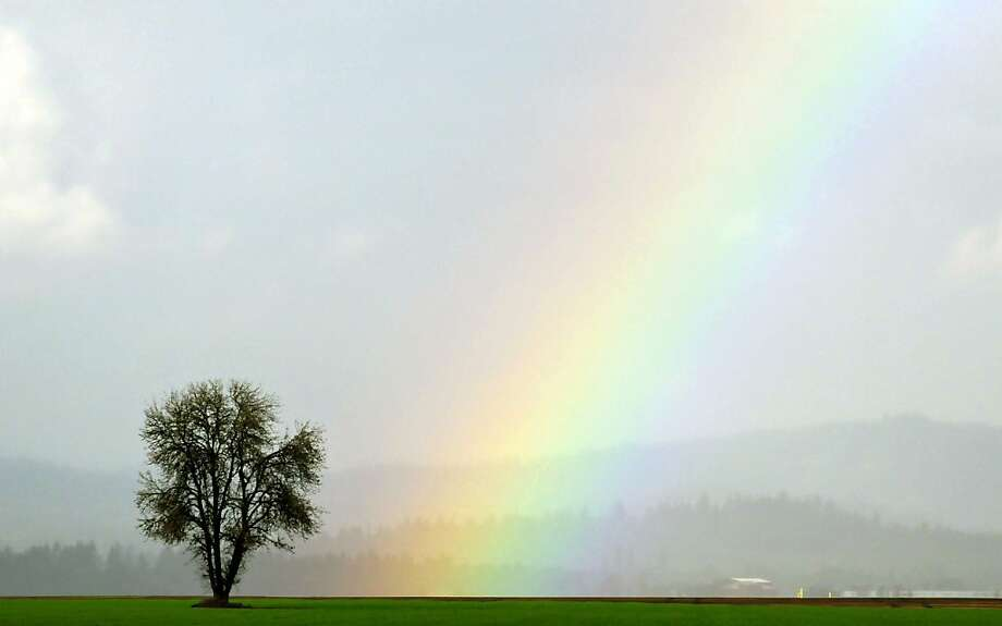 A rainbow forms next to a tree near Corvallis, Ore. Photo: Andy Cripe, Associated Press