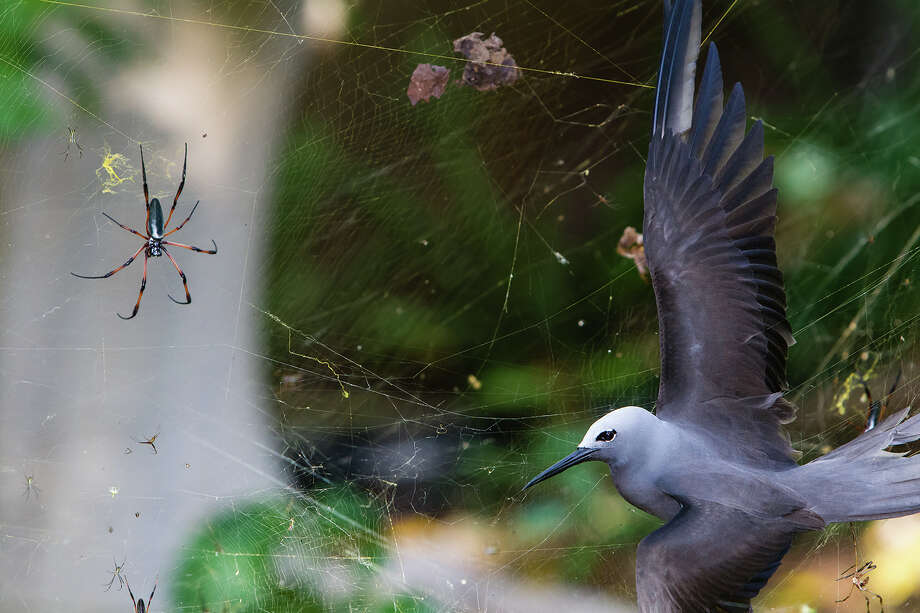 Isak PretoriusWinner: Behaviour: Birds