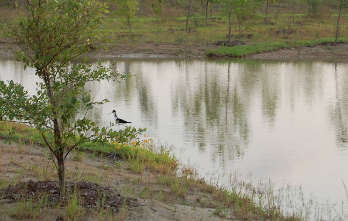 Birds flock to Willow Water Hole, a retention pond that doubles as a park.