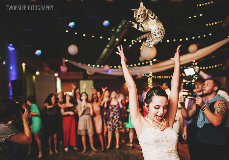 Courtesy of Brides Throwing Cats Photo: Courtesy / Two Pair Photography