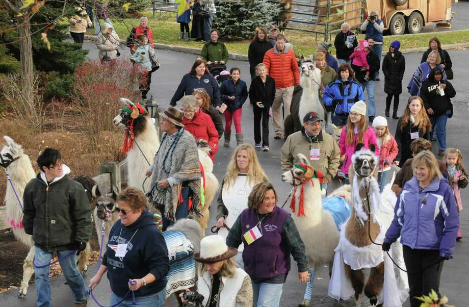 Llamas and their owners in costume parade on the grounds of The Century House as part of the Greater Appalachian Llama and Alpaca Association annual conference on Saturday Nov. 9, 2013 in Latham, N.Y. (Michael P. Farrell/Times Union) Photo: Michael P. Farrell / 00024554A