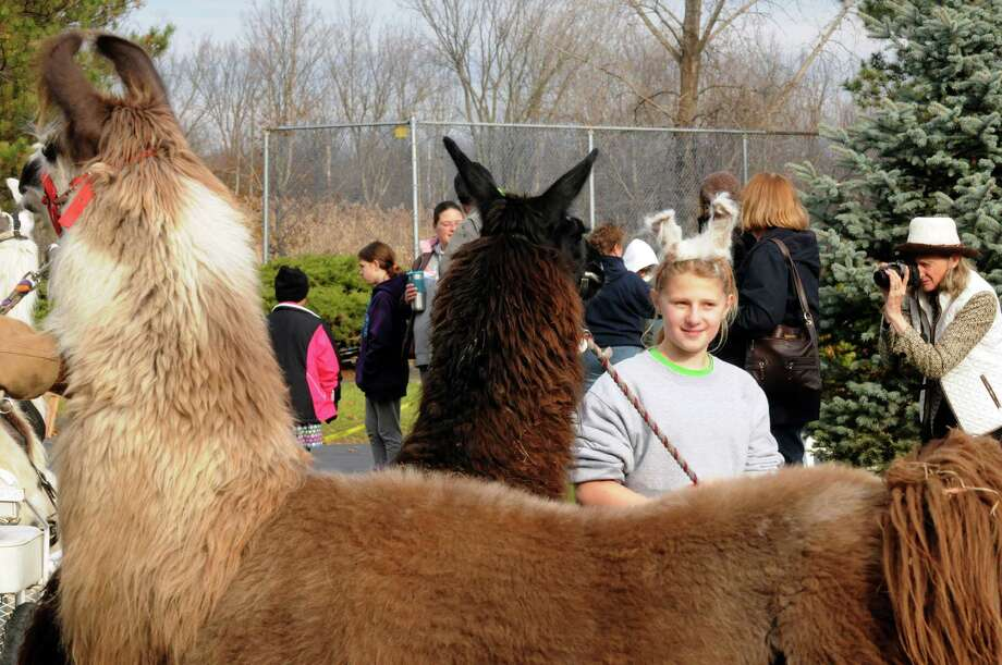 Eleven-year-old Jessica Weingold of Johnsville wearing llama ears takes part in a costume parde with her llama Maestro on the grounds of The Century House as part of the Greater Appalachian Llama and Alpaca Association annual conference on Saturday Nov. 9, 2013 in Latham, N.Y. (Michael P. Farrell/Times Union) Photo: Michael P. Farrell / 00024554A
