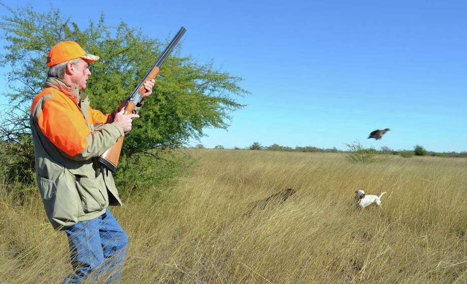 The number of quail hunters in Texas has declined even more precipitously than the once-abundant bobwhites they pursue. About 21,000 wingshooters hunted quail in Texas this past season, a 90 percent decline from the almost 225,000 quail hunters in the 1980s. Photo: Ralph Winingham, Freelancer / San Antonio Express-News