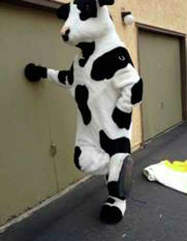 This undated photo released by the Redlands, Calif., Police Department, shows an unknown person posing in a stolen cow costume in San Bernardino, Calif., for an ad that was seen by police on Craigslist. Redlands police said two 7-foot cow costumes created for the Chick-fil-A chain were nabbed in separate restaurant burglaries, turned up for sale for $350 apiece on Craigslist in late October. An undercover officer arranged to buy the bovine attire in time for Halloween, and when the seller produced the black-and-white outfits he was arrested on Oct. 30, 2013. Robert Michael Trytten, 43, of Riverside, is being held on suspicion of possession of the stolen property on $275,000 bail. Photo: Uncredited, AP / AP2013