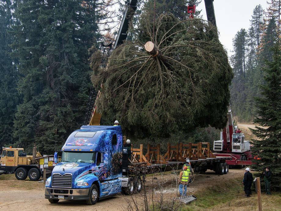 This Nov. 1, 2013 photo released by SkyBitz shows the 2013 U.S. Capitol Christmas tree being loaded on a flatbed truck that was cut from the 1.1 million acre Colville National Forest in Wash. The six-story tall evergreen will travel more than 4,000 miles and stop in three Utah cities before reaching its destination on the west lawn of the U.S. Capitol. Photo: HOEP, AP / AP2013