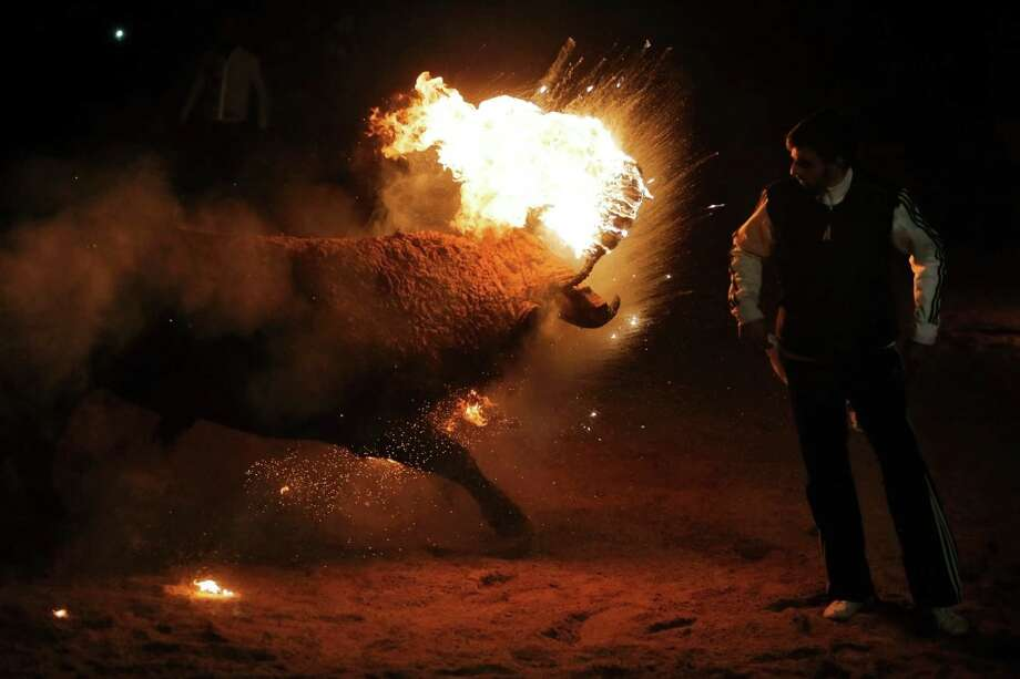 "In this photo taken on Saturday, Nov. 9, 2013, a fire bull chases a reveler during the 'Toro de Jubilo' Fire Bull Festival in Medinaceli, Spain. Fire bull Festival ""Toro de Jubilo"" that takes place in the main square of Medinaceli is an ancient tradition from the bronze age. During the event a bull is tied to a pylon and flammable balls attached to the bull's horns are set on fire before the animal released. Revelers dodge the bull when it comes close until the flammable material is consumed. The bull is covered with a thick layer of mud on the back and face to protect it from burns. Photo: Andres Kudacki, AP / AP"