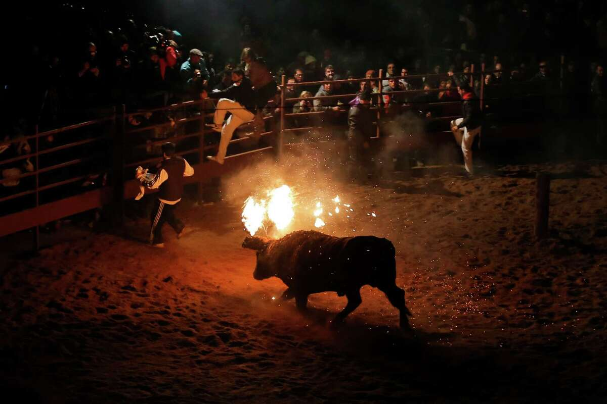 As the Daily Mail puts it: A terrified bull writhes and bucks as flames lick around its head moments after it is set ablaze - all for the entertainment of a baying crowd. Shocking new images have emerged of a barbaric annual Spanish bull burning festival which animal rights campaigners are demanding be banned. Click through to decide for yourself ...Photo: Revelers jump over the barricades as a fire bull chases them during the 'Toro de Jubilo' Fire Bull Festival in Medinaceli, Spain, in the early hours of Sunday, Nov. 10, 2013. Fire bull Festival