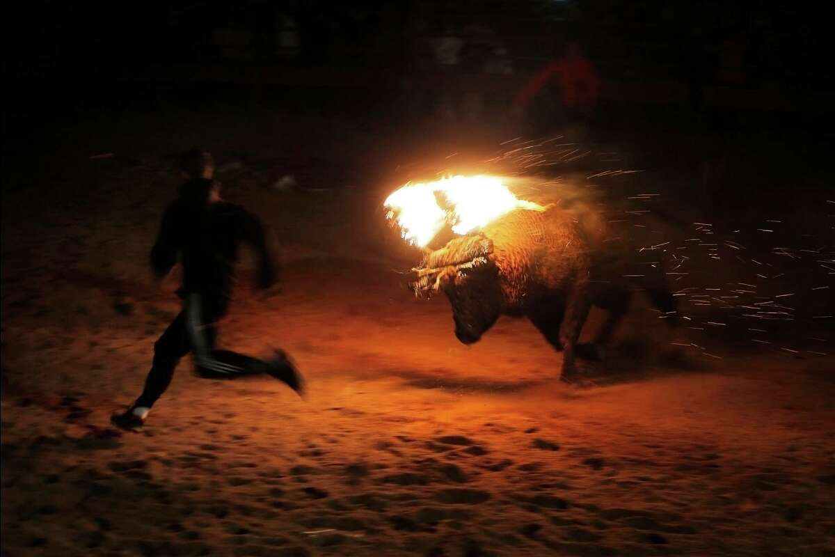 A fire bull chases a reveler during the 'Toro de Jubilo' Fire Bull Festival in Medinaceli, Spain, Sunday, Nov. 10, 2013,. Fire bull Festival