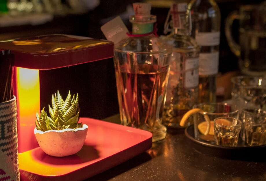 A cactus on the bar at La Urbana in San Francisco. Photo: John Storey, Special To The Chronicle