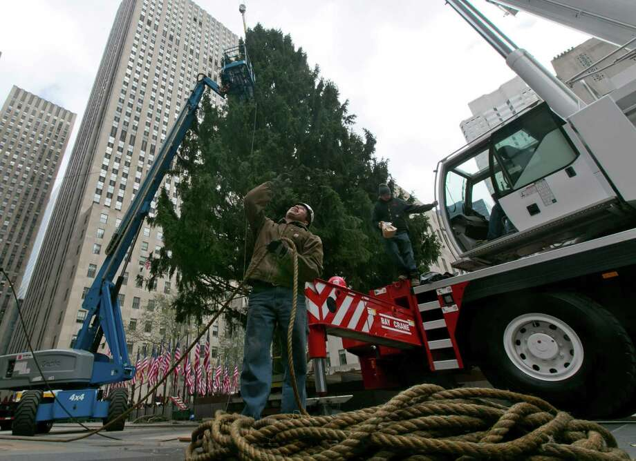A worker coils rope as the Rockefeller Center Tree is secured in place, Friday, Nov. 8, 2013, in New York. The 76-feet tall Norway spruce, donated by John and Louise Vaargoshe, of Shelton, Conn., is approximately 75-years-old and weighs 12 tons.  (AP Photo/Richard Drew) ORG XMIT: NYRD116 Photo: Richard Drew, AP / AP