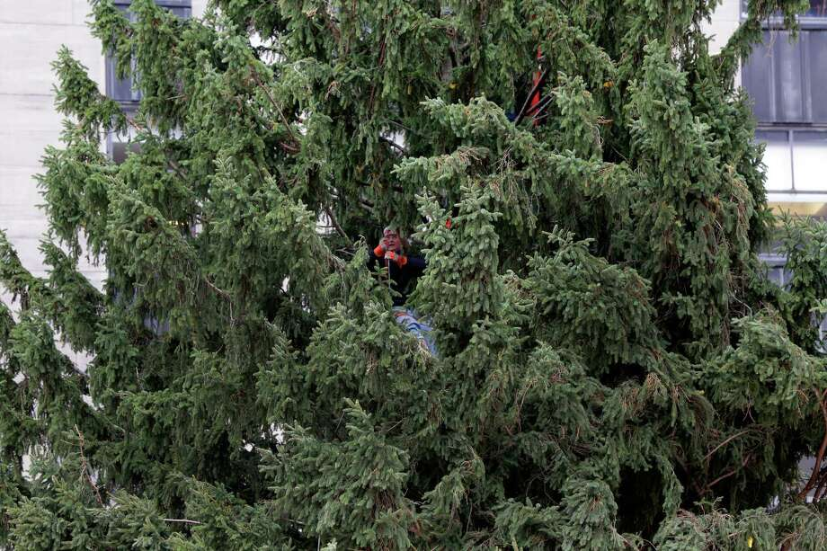 A worker attaches a guy-wire to the Rockefeller Center Tree as its secured in place, Friday, Nov. 8, 2013, in New York. The 76-feet tall Norway spruce, donated by John and Louise Vaargoshe, of Shelton, Conn., is approximately 75-years-old and weighs 12 tons.  (AP Photo/Richard Drew) ORG XMIT: NYRD115 Photo: Richard Drew, AP / AP