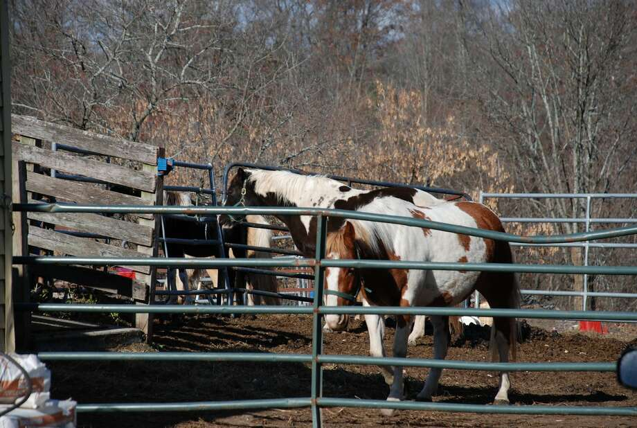 The Bethlehem Police Department, along with Bethlehem Animal Control, ASPCA and several other agencies, look over horses at the Walden Farm on Waldenmaier Road in Bethlehem on Nov. 11, 2013. (Tom Heffernan Sr./Special to the Times Union) Photo: Picasa