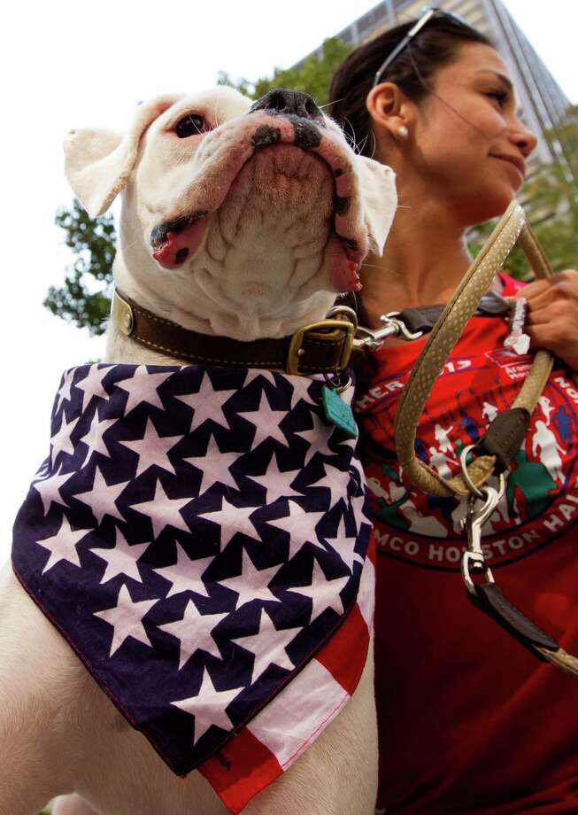 Lola a two-year-old boxer wears a patriotic scarf as she and her owner Michelle Becerra watch the annual City of Houston Veterans Day parade on Monday, Nov. 11, 2013, in Houston.  The celebration also included a Veterans job and health fair. Photo: J. Patric Schneider, For The Chronicle / © 2013 Houston Chronicle