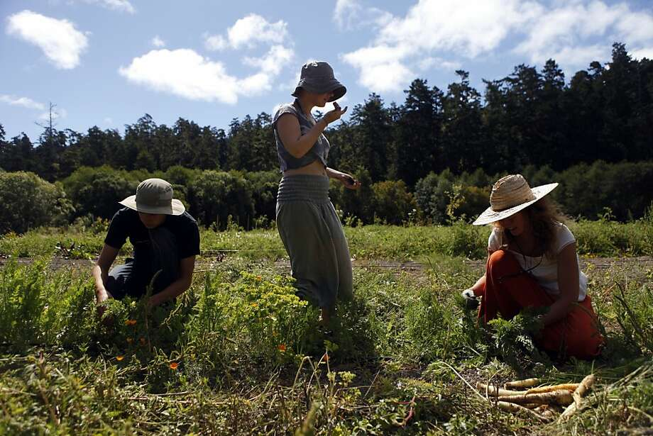 Vicente Fernandez of Chile (left), Olivia de Castres of Australia and Adrienne Ahnell of Arcata pick carrots at Marie's Farm on 108 acres in Pescadero. Photo: Katie Meek, The Chronicle