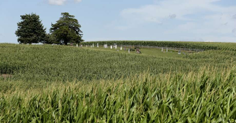 The Sturgeon Cemetery near Sewal, Iowa stands as an island among corn plants. Forty-four percent of the nation's corn crop in 2012 was used for fuel, about twice the rate seen in 2006, according to the Department of Agriculture. With ethanol production helping to drive up the price of corn and enticing farmers to plant on more and more acres, the cemetery is now surrounded by cornfields with only a primitive trail for access. Photo: Charlie Riedel, AP