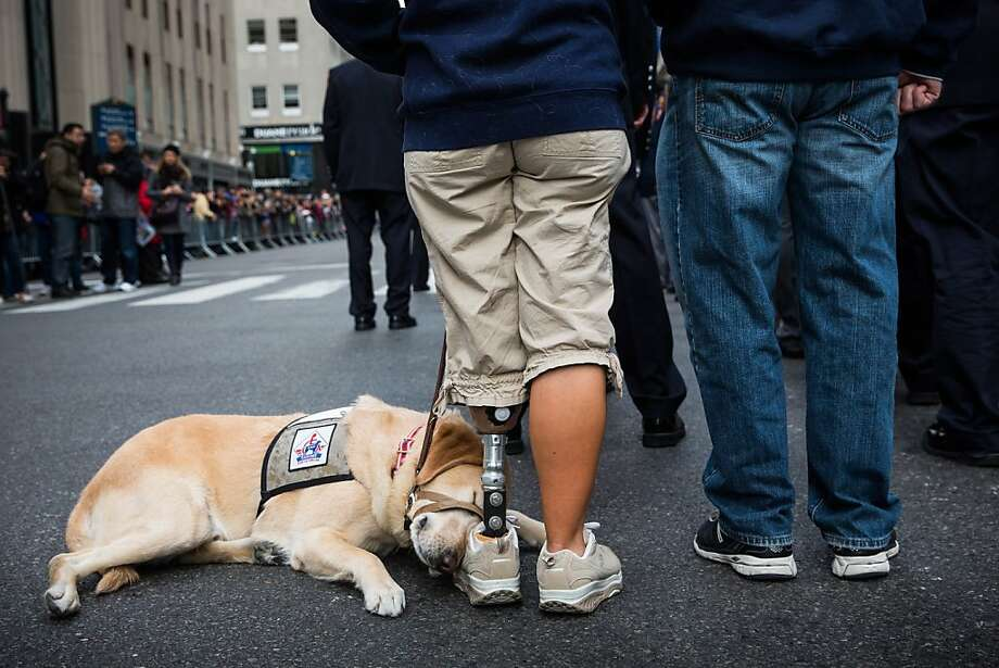 Temporarily out of service: A service dog naps on its owner's shoe in New York City. Photo: Andrew Burton, Getty Images