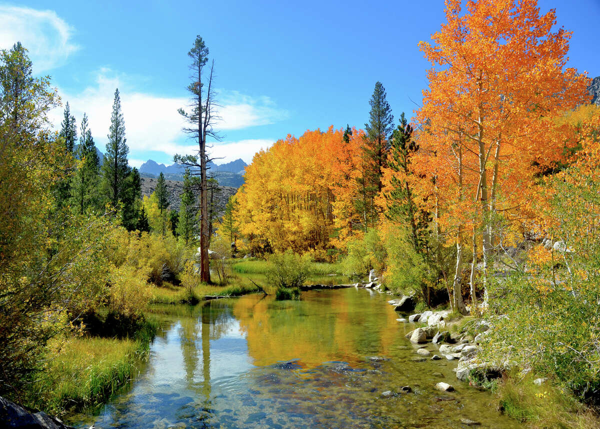 Flaming colors are reflected in a stream in Bishop Creek Canyon, one of the top locations for fall colors in Inyo and Mono counties.
