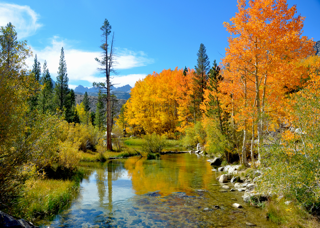 Best Bets For Fall Foliage In The Bay Area And Northern