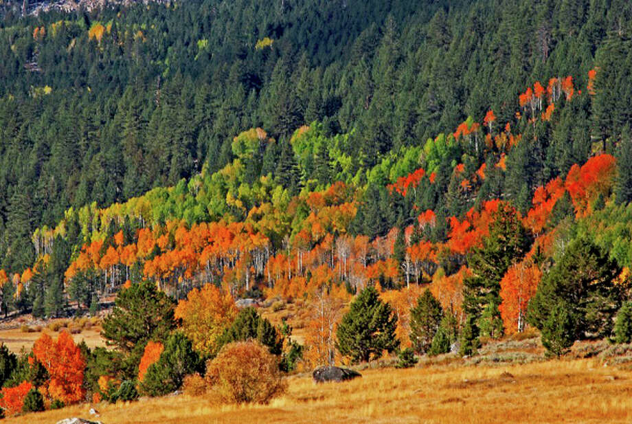 Highway 88 through the Carson Pass in Hope Valley is lined by flaming color in mid-October. Photo: Kimberly Kofala