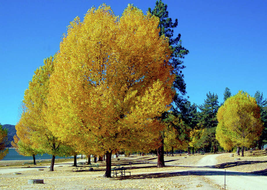 A November scene at Lake Hemet Campground in the San Jacinto Mountains, east of Los Angeles. Photo: Todd Stepien