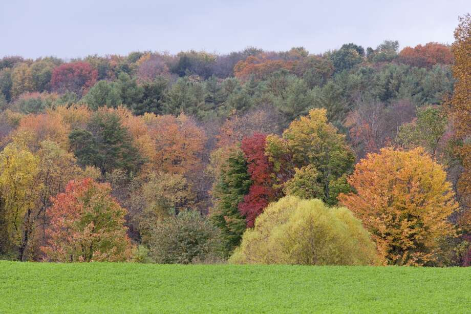 A bright green field contrasts with beautiful trees with leaves that have turned orange, yellow and red, on October 7, 2013 in Gill, Massachusetts. Photo: Christian Science Monitor, Melanie Stetson Freeman/The Christian Science Monitor Via Getty Images