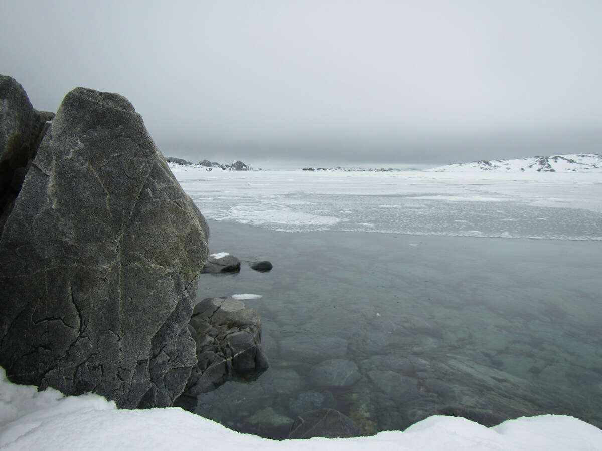 A photo from Antarctica on the Woods Hole Oceanographic Institution's blog shows open water in Arthur Harbor. In the absence of much biological activity, the water remains extraordinarily clear. (Jamie Collins/ http://web.whoi.edu/coldsuncommunication/)