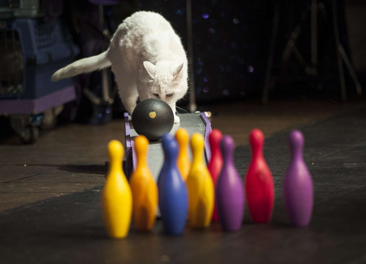 3. The Acro-Cats say during their show you can expect a cat vs. chicken bowling showdown.