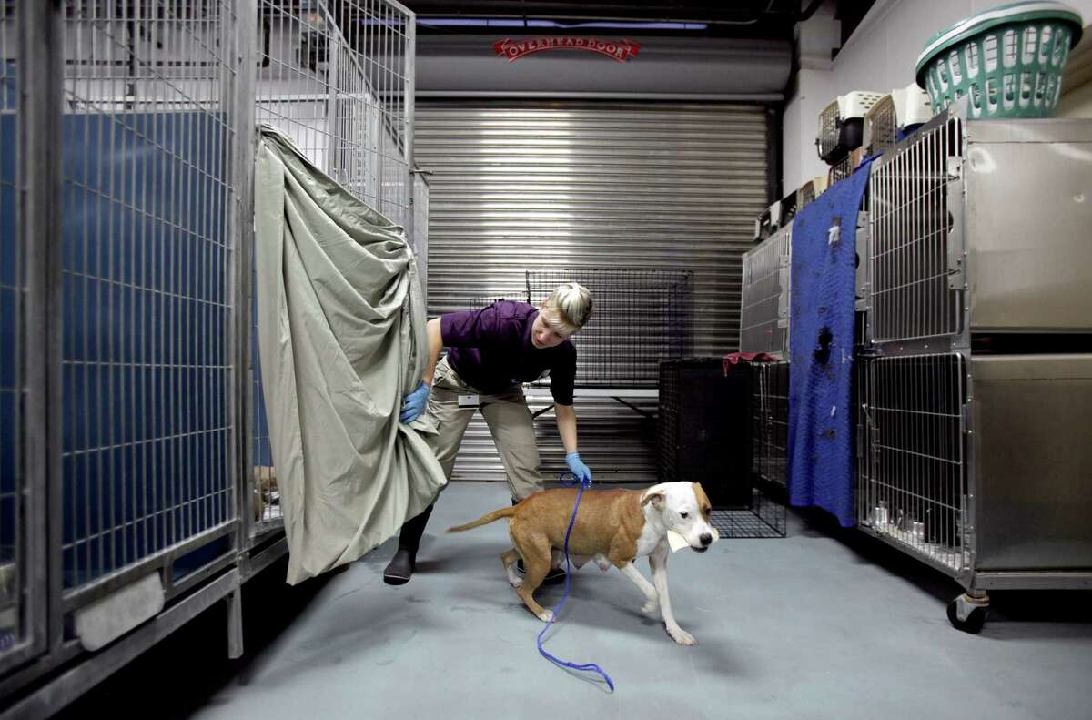 Amelia Nusbaum gives a female dog a break from her puppies housed in the puppy nursery at BARC, who announced it will be making additions to the facility. The Puppy Nursery was originally a sally port, but because of limited space it became the puppy nursery.