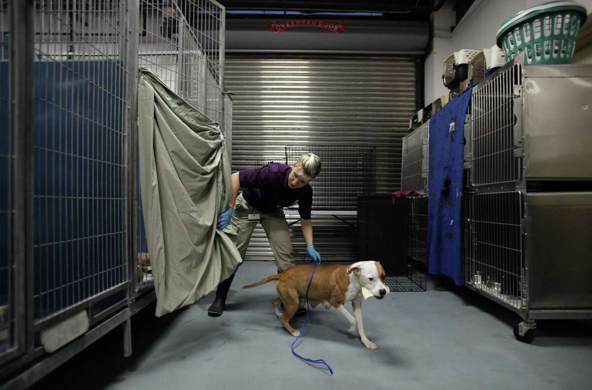 Amelia Nusbaum gives a female dog a break from her puppies housed in the animal nursery at the city shelter, which is launching a $6.1 million expansion.