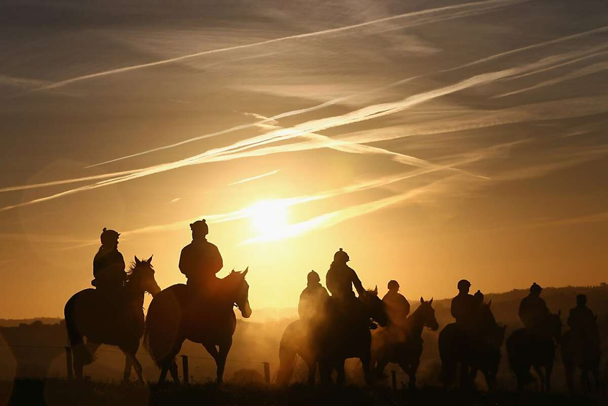 GLOUCESTER, ENGLAND - NOVEMBER 13: Horses are run out during early morning gallops at the stable of Nigel Twiston-Davies at Luckley on November 13, 2013 in Gloucester, England. (Photo by Michael Steele/Getty Images) *** BESTPIX ***