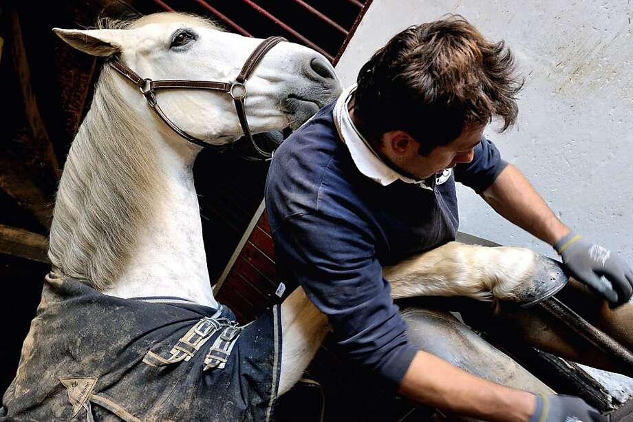 I think I'm a size 10 and a half:A farrier shoes a horse in Orgeres, France. The French government plans to saddle equestrian centers with a 20-percent Value Added Tax, a levy that has the horse set snorting mad. Photo: Philippe Huguen, AFP/Getty Images