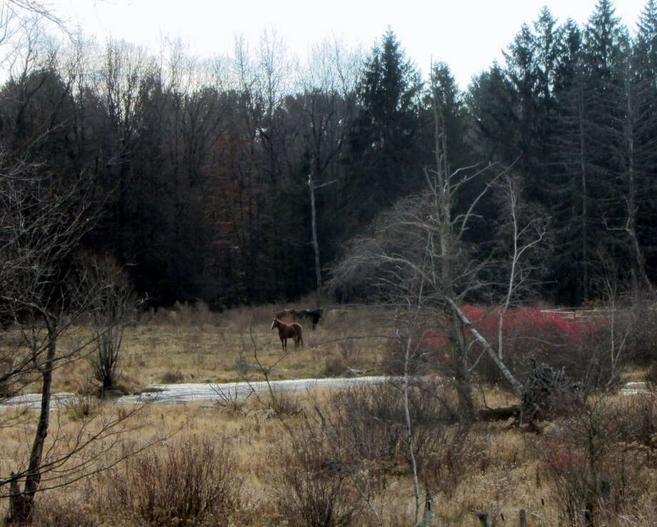 Horses graze on the Greenfield farm formerly owned by Ann Arnold, who was banned a year ago from having horses on the property. (Bob Gardinier/Times Union) Photo: Picasa