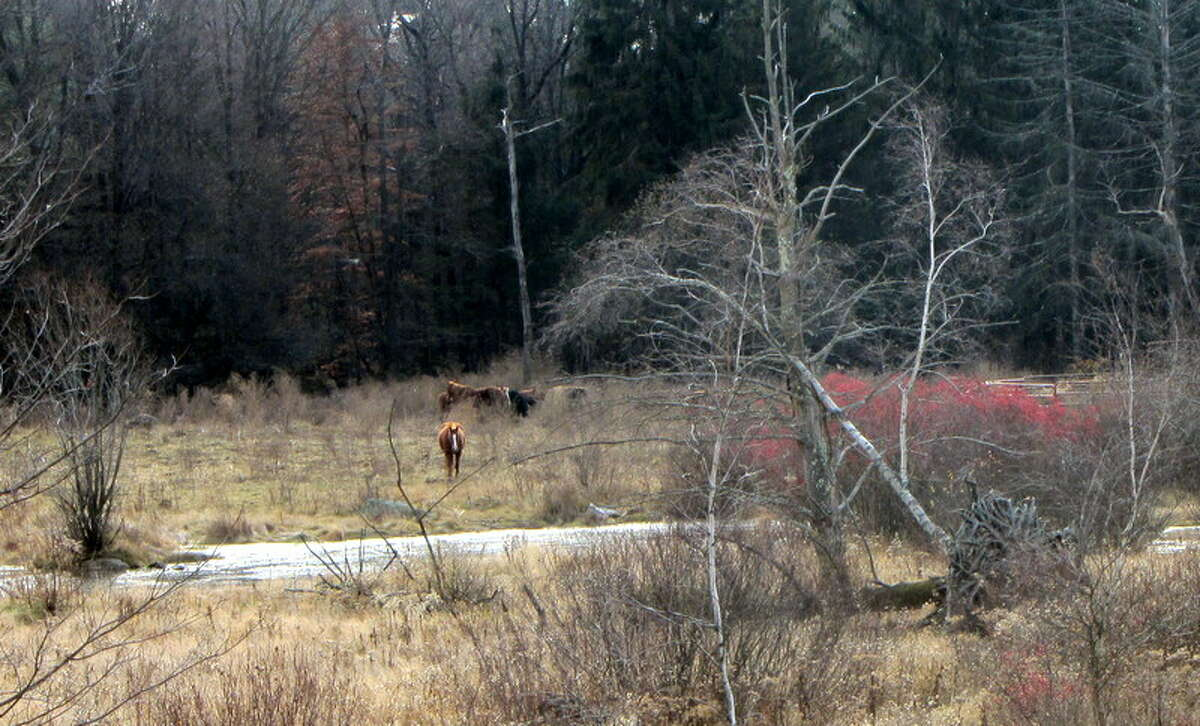 Horses graze on the Greenfield farm formerly owned by Ann Arnold, who was banned a year ago from having horses on the property. (Bob Gardinier/Times Union)