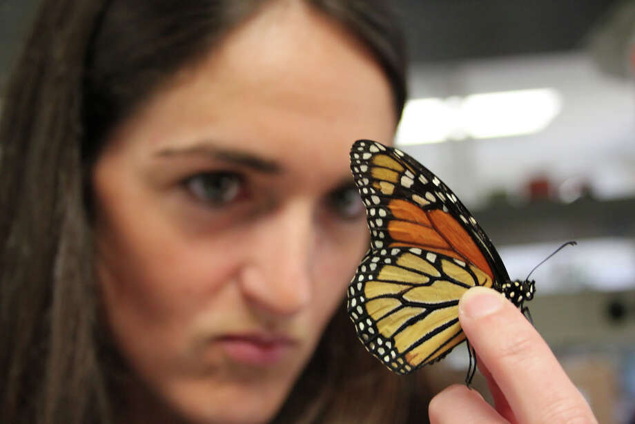 Texas A&M biologist Christine Merlin is studying what makes the Monarch migrate. (TAMU photo)