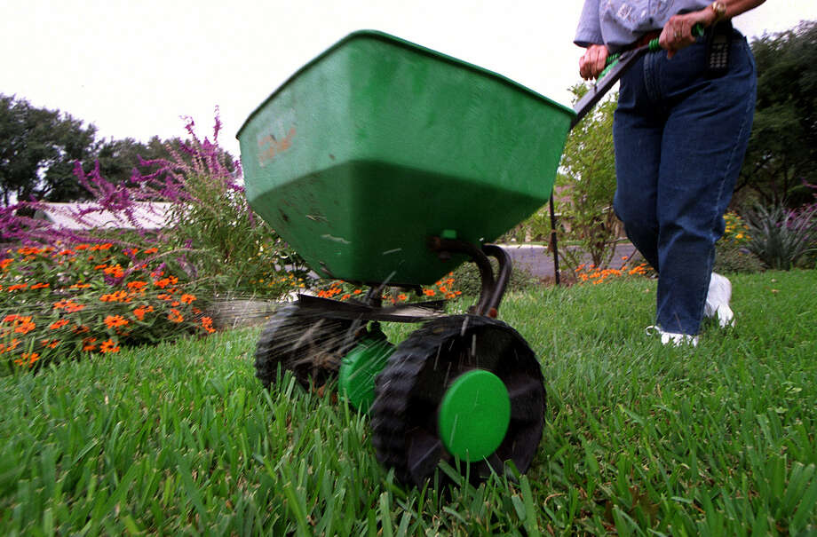 Fertilizer applied to grass in fall will be stored in the roots and stems and will prompt earlier greening in spring. Photo: Express-News File Photo